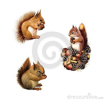 Free Red Squirrel Eating, Baby Squirrel, American Gray Squirrel Paw Anxiously Pressed To His Chest, Isolated On White Background. Stock Images - 30638014