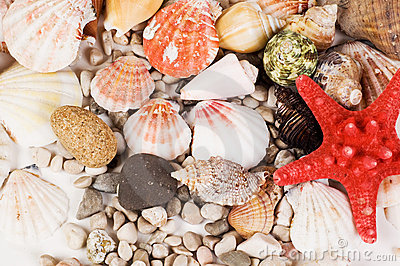 Red star and sea shells