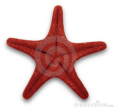 Free Red Starfish Stock Photography - 2913302