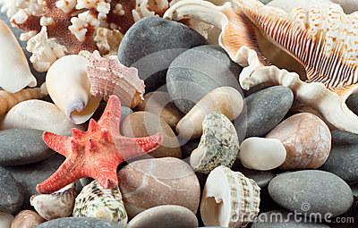 Red starfish with shells