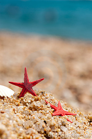 Red starfishes