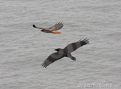 Red Tail and Raven