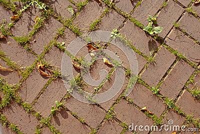 Red terra cotta brick pattern