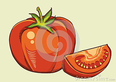 Red tomatos.Vector fresh vegetable isolated illust