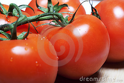 Red tomatos on a vine