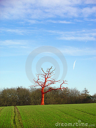Free Red Tree Royalty Free Stock Image - 1596446