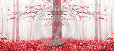 Red tree in a foggy forest