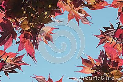 Red Tree Leaves Bordering Sky