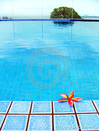 Red tropical Flower, blue resort swimming pool