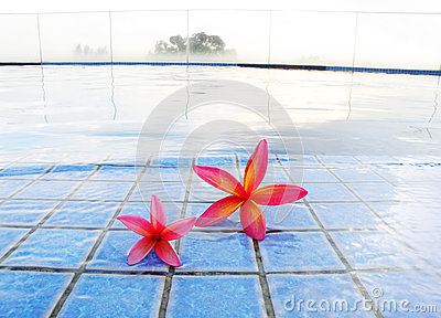 Red tropical flowers at misty resort pool