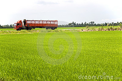 Red Truck through Paddy Field