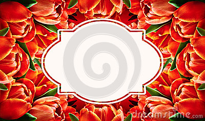 Red tulip flowers background Stock Photo