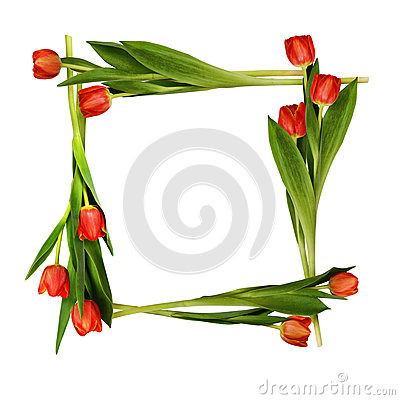 Red tulip flowers frame Stock Photo