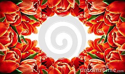 Red tulip flowers horizontal frame Stock Photo