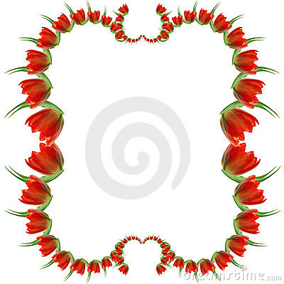 Red tulip frame