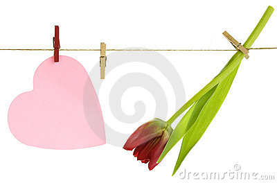 Red tulip  and paper heart on a clothes line