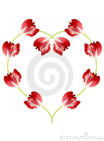 Free Red Tulips Royalty Free Stock Photo - 1805265