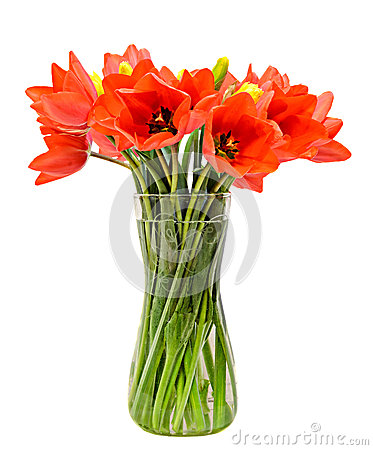 Free Red Tulips Flowers, Floral Arrangement (bouquet), In A Transparent Vase, White Background Royalty Free Stock Photo - 53296455