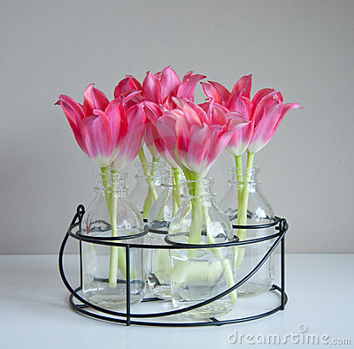 Free Red Tulips In Glass Vases Royalty Free Stock Photography - 17517637