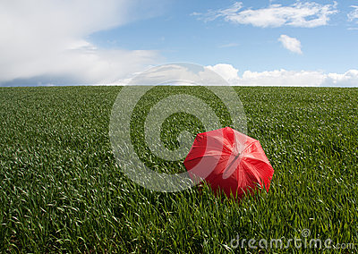 Red umbrella on the green meadow