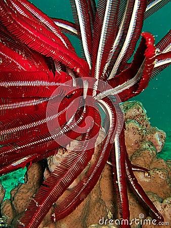 Red underwater plant