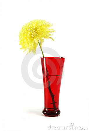 Red vase with autumnal yellow aster flower