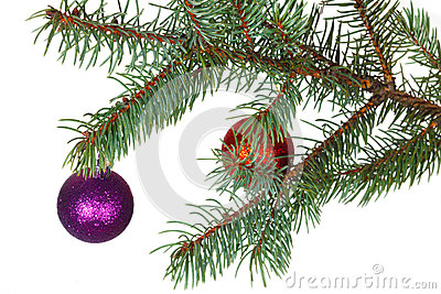 Red and violet balls on the branch of Christmas tree