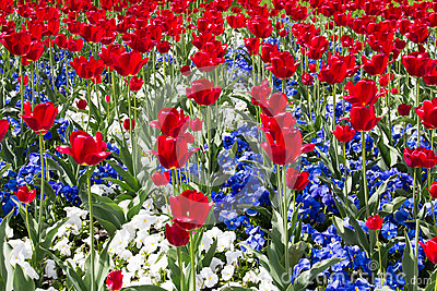 Red, White And Blue Stock Photo - Image: 43965469 White Daisy Flowers Clipart