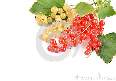 Red and White Currant Berries