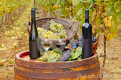 Red and white wine in the vineyard