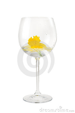 Red Wine Glass With Narcissus Flower