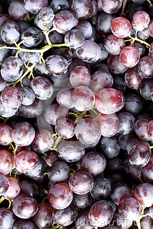 Free Red Wine Grapes Royalty Free Stock Images - 78483129