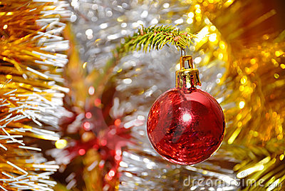 Red xmas ball hanging on pine twig