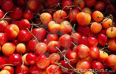 Red and Yellow Cherries Bunch