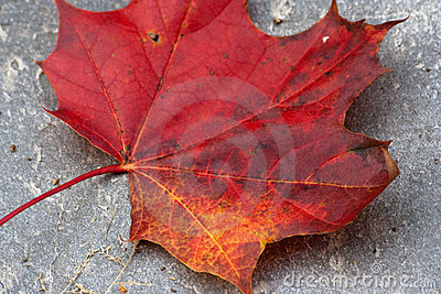 Red and yellow leaf
