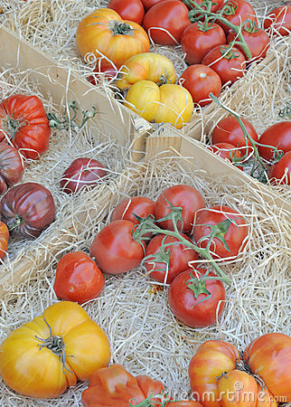 Red and yellow tomatoes at market