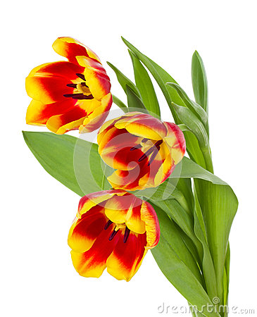 Red-yellow tulips bouquet