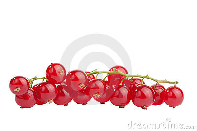 Redcurrant isolated