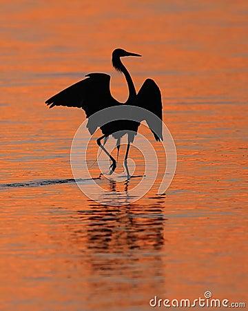 Free Reddish Egret Silhoeutte At Sunset- Sanibel Island Stock Photo - 23934960