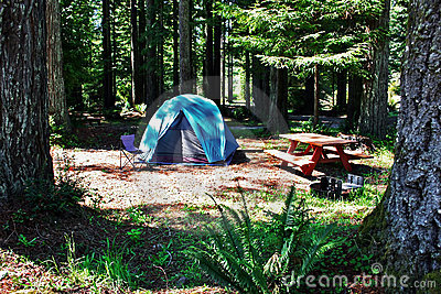 Redwood Tent Campsite