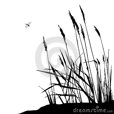 Free Reed And Flying Dragonfly - Vector Illustration Royalty Free Stock Images - 65220279