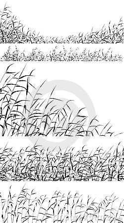 Free Reed Foregrounds Royalty Free Stock Image - 10719266