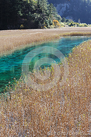 Reed lake in Jiuzhaigou