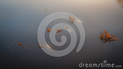 Reeds in misty lake