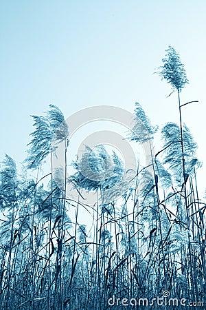 Reeds under sky