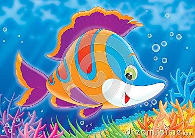 Reef 02