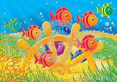 Reef 15