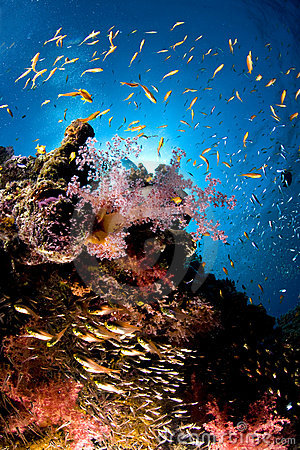 Free Reef And Colored School Of Fish, Red Sea, Egypt Stock Photography - 12545222