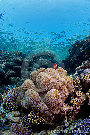 Coral Reef Fish on Stock Photography  Reef Fish On Coral  Image  3501202