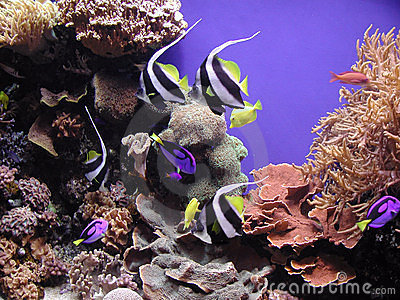 Reef Fish and Corals